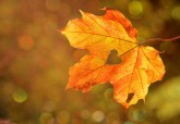 7 Ways to Support your Immunity this Autumn
